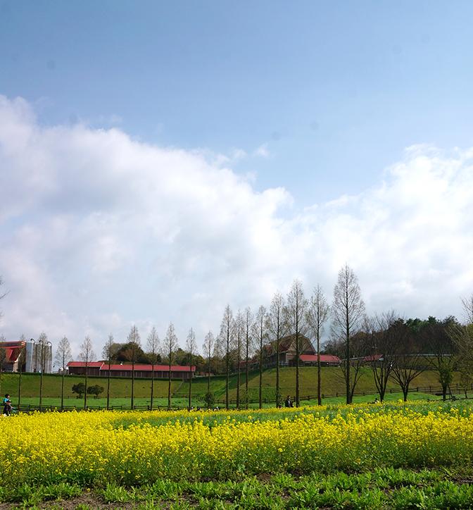 ピクニックに最適♪春の油山牧場