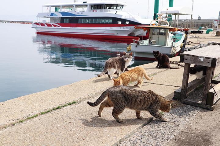 話題の猫島・相島(あいのしま)の旅