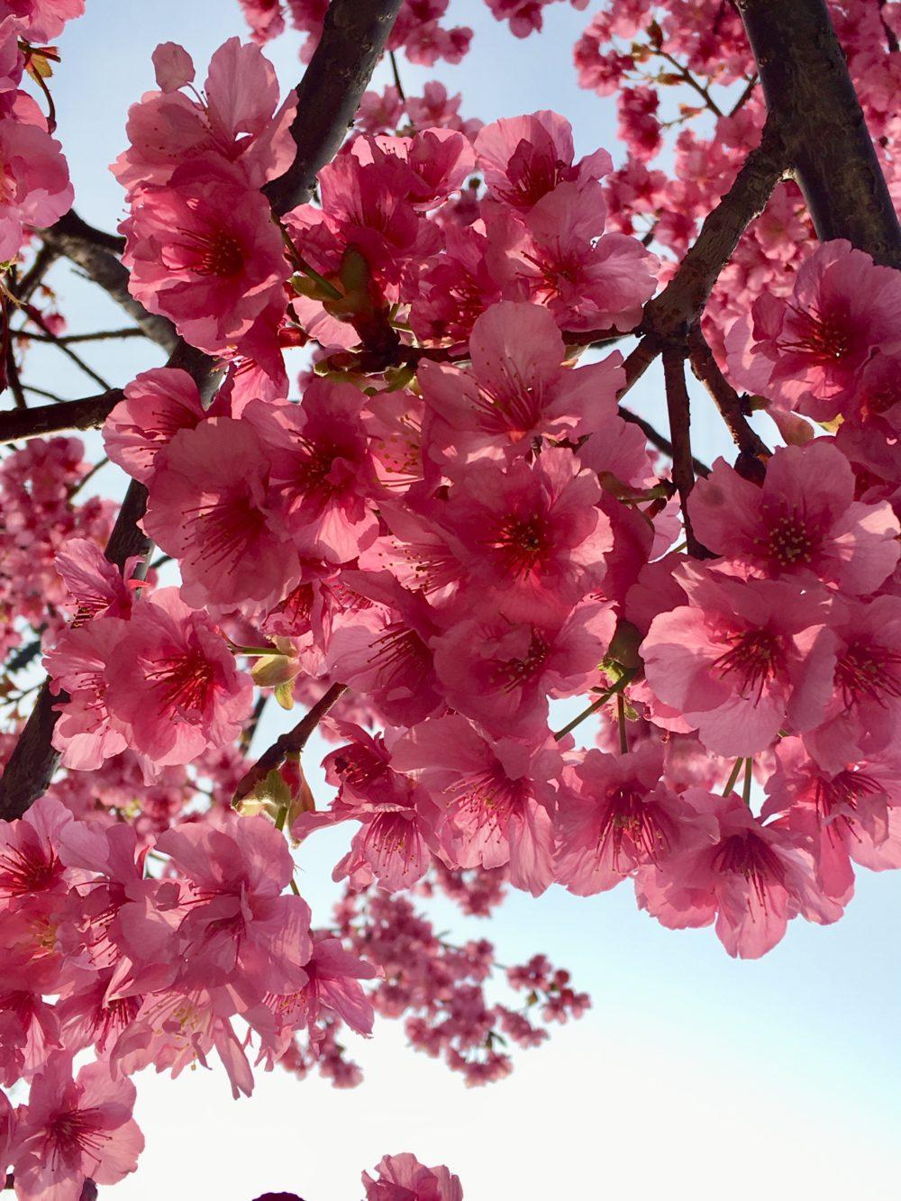 春ですね♪あなたとトゥラッタッタ〜