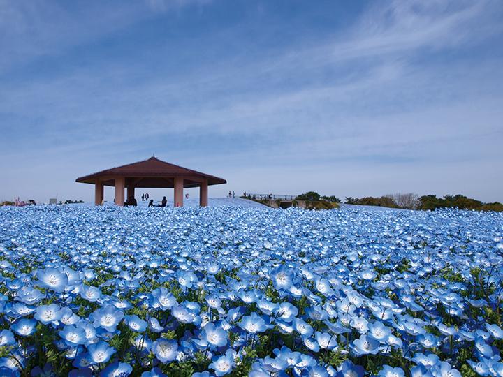 海の中道海浜公園で春を満喫!